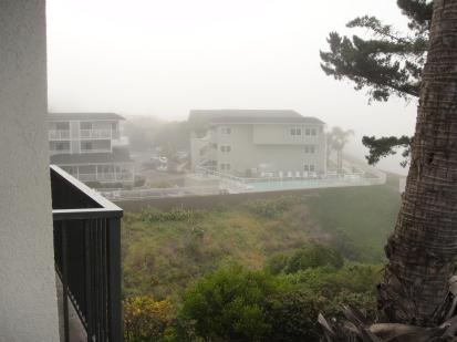 Foggy morning in California - JohnnyfromCA
